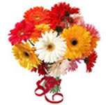 Send these 12 lovely Gerberas and let them depict that how much you miss being there on this special occasion.