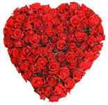 Wanna win his/her heart, then send this garden of 100 Fresh Dutch Roses with baby wreaths which says,