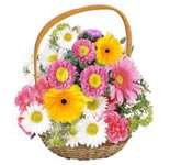 Mixed 20 colourful  gerberas, carnations and chrysanthums in a round handle basket, will surely change the gloomy mood into smiles all over.