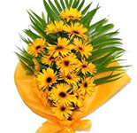 A Bunch of 12 Yellow Gerberas with ribbon and Greens.   A perfect gift to bring good luck and best wishes in someone\'s life.