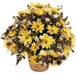Yellow Gerberas, Carnations and Daisies in a tall basket arrangement.